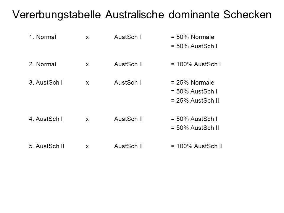 Vererbungstabelle Australische dominante Schecken 1. Normal xAustSch I= 50% Normale = 50% AustSch I 2. NormalxAustSch II= 100% AustSch I 3. AustSch Ix
