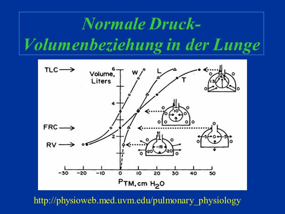 Grundlagen Physiologie http://www.biology.eku.edu/RITCHISO/301notes6.htm
