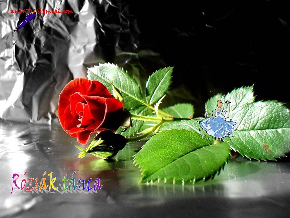 ani4702@gmail.com
