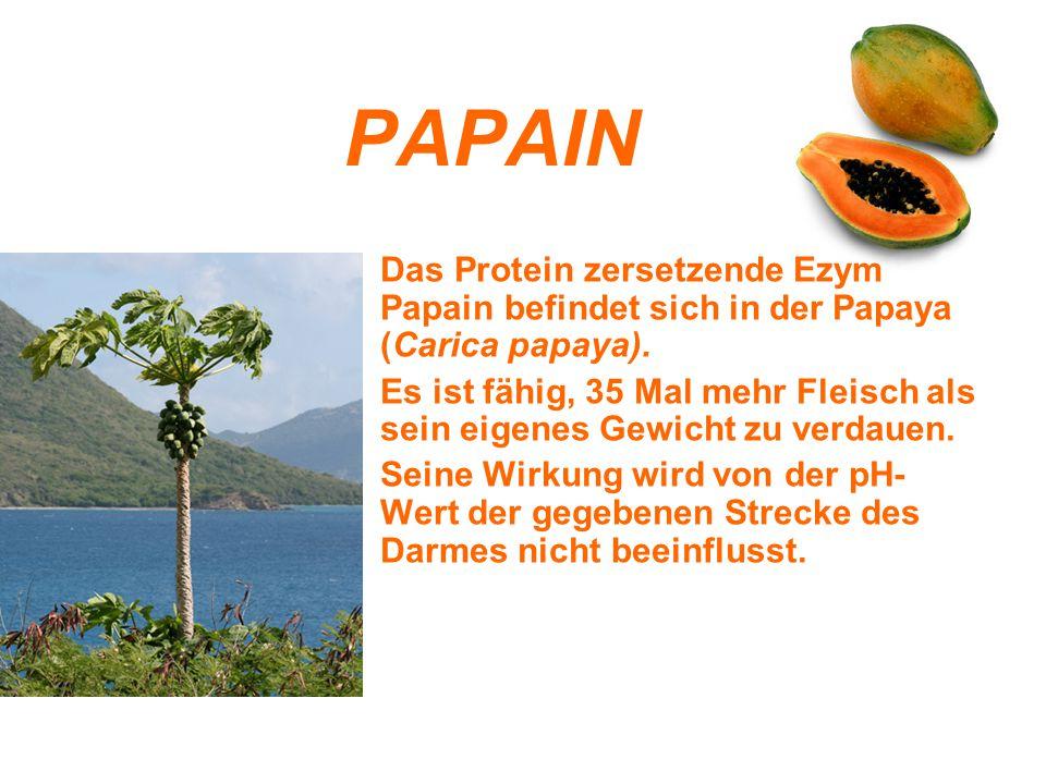 PAPAIN Das Protein zersetzende Ezym Papain befindet sich in der Papaya (Carica papaya). Es ist fähig, 35 Mal mehr Fleisch als sein eigenes Gewicht zu