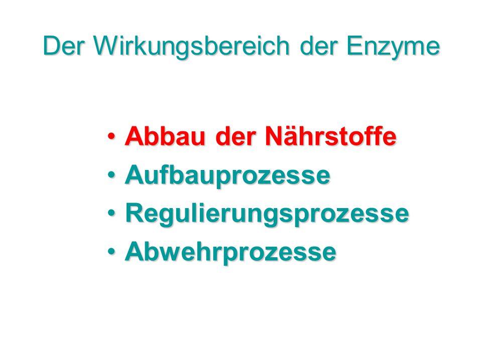 Der Wirkungsbereich der Enzyme Abbau der NährstoffeAbbau der Nährstoffe AufbauprozesseAufbauprozesse RegulierungsprozesseRegulierungsprozesse Abwehrpr
