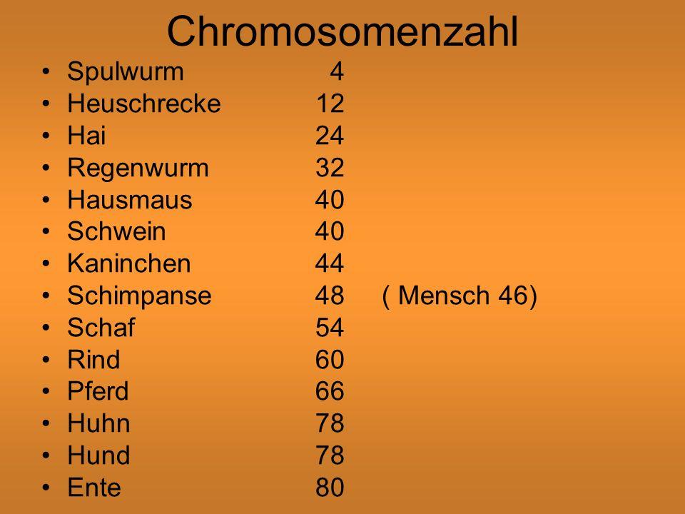 Chromosomenzahl Spulwurm 4 Heuschrecke12 Hai24 Regenwurm32 Hausmaus40 Schwein40 Kaninchen44 Schimpanse48 ( Mensch 46) Schaf54 Rind60 Pferd66 Huhn78 Hund78 Ente80