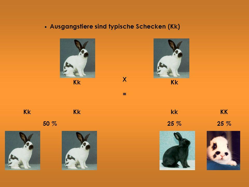 Ausgangstiere sind typische Schecken (Kk) Kk X = kk KK 50 %25 %