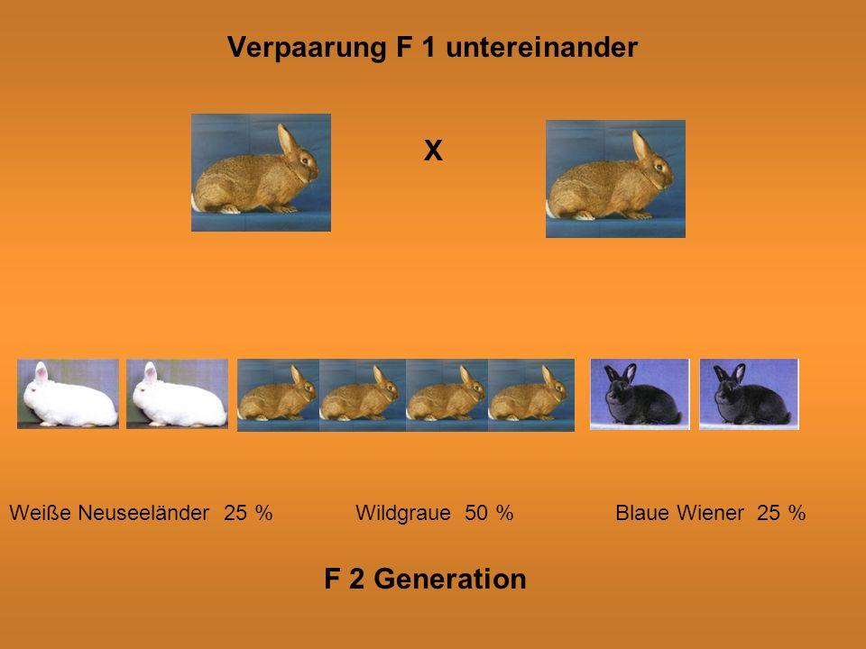Verpaarung F 1 untereinander X Weiße Neuseeländer 25 %Wildgraue 50 %Blaue Wiener 25 % F 2 Generation