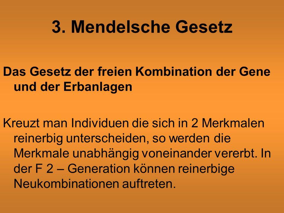 3. Mendelsche Gesetz Das Gesetz der freien Kombination der Gene und der Erbanlagen Kreuzt man Individuen die sich in 2 Merkmalen reinerbig unterscheid