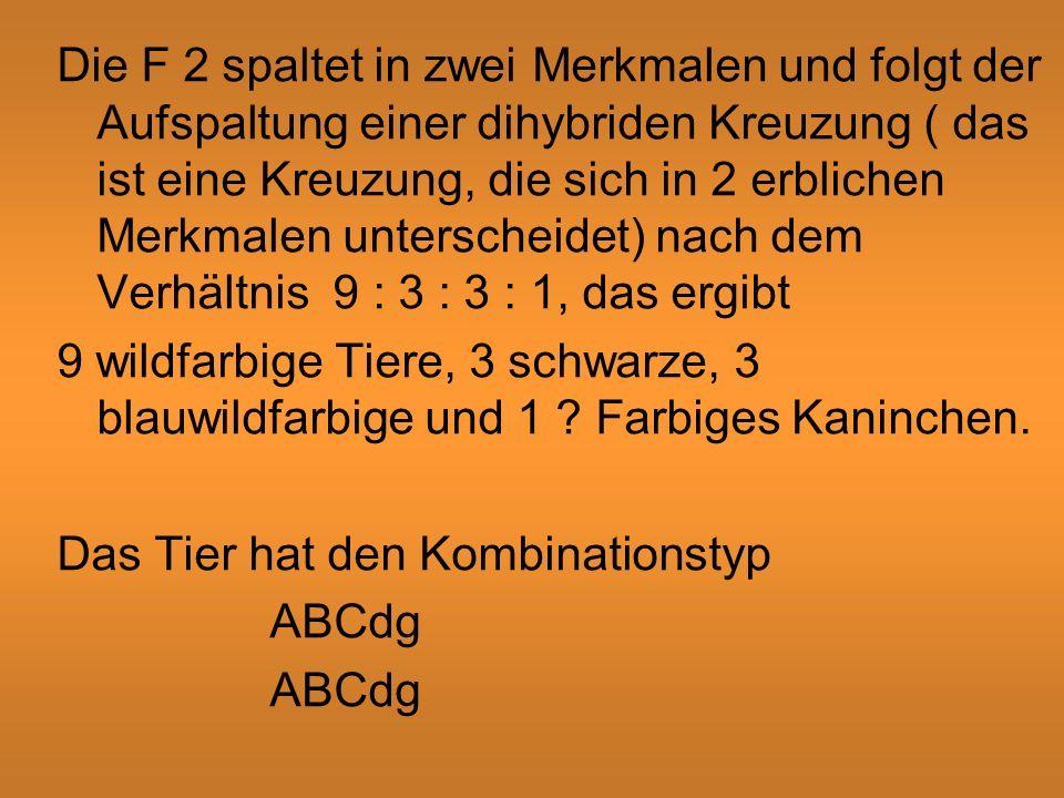Die F 2 spaltet in zwei Merkmalen und folgt der Aufspaltung einer dihybriden Kreuzung ( das ist eine Kreuzung, die sich in 2 erblichen Merkmalen unterscheidet) nach dem Verhältnis 9 : 3 : 3 : 1, das ergibt 9 wildfarbige Tiere, 3 schwarze, 3 blauwildfarbige und 1 .