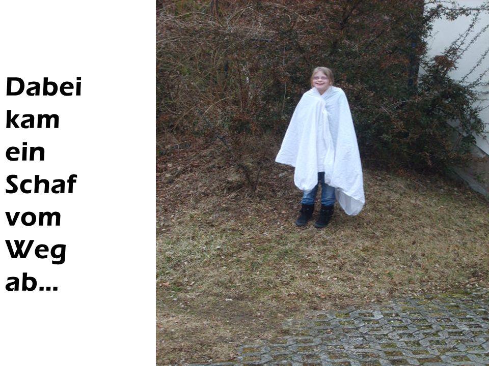 Dabei kam ein Schaf vom Weg ab…