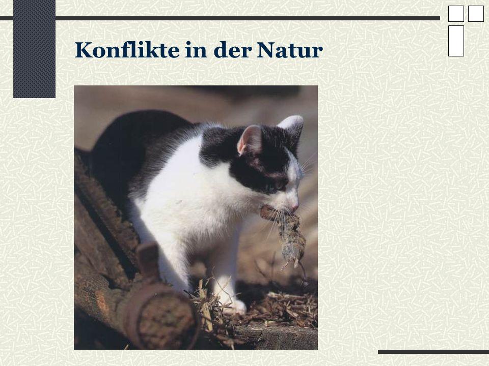 Konflikte in der Natur