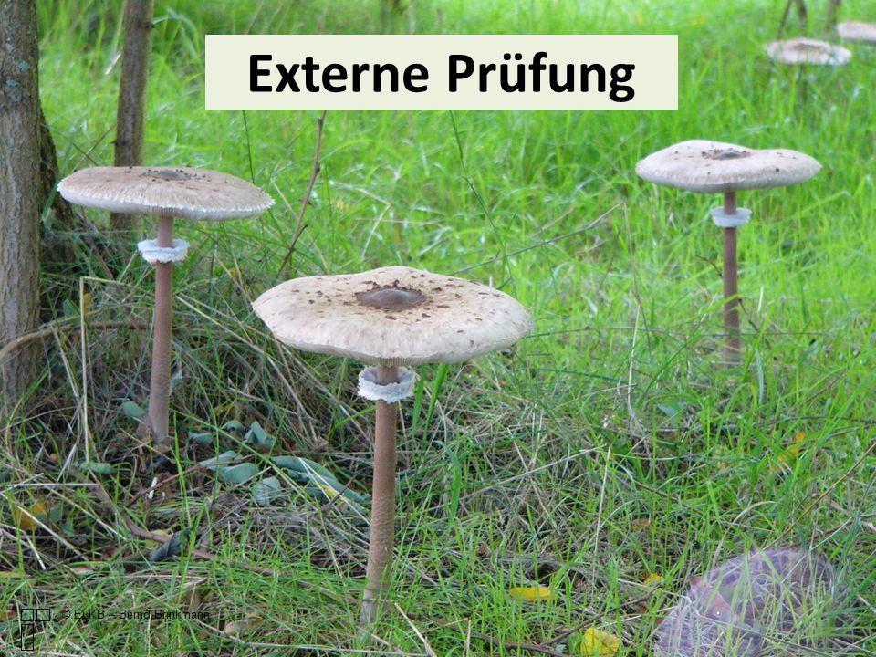© ELKB – Bernd Brinkmann Externe Prüfung