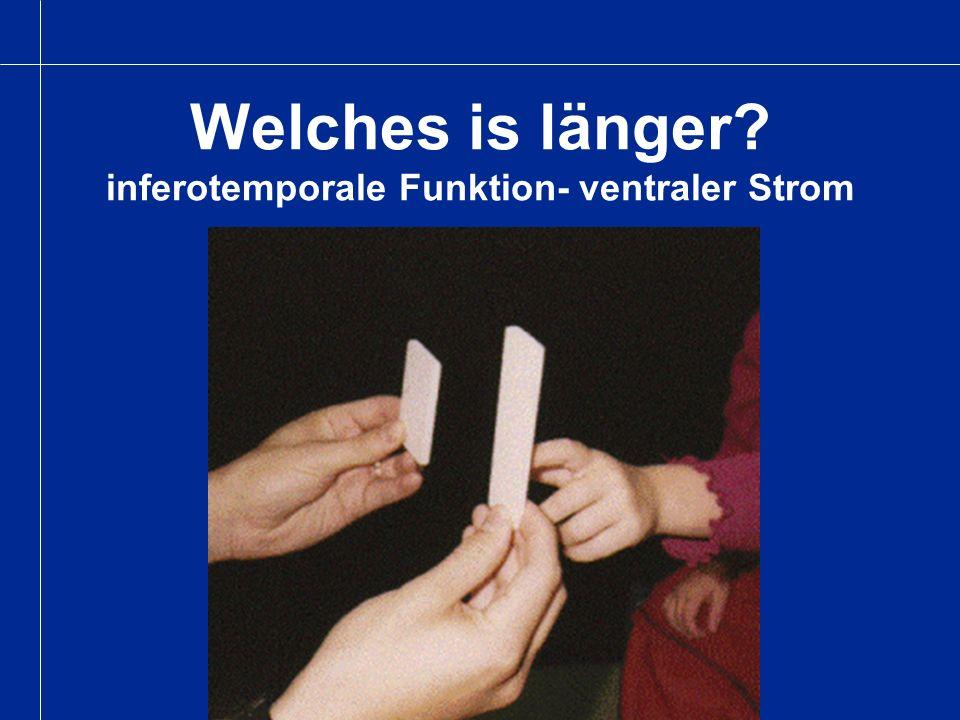 Welches is länger? inferotemporale Funktion- ventraler Strom