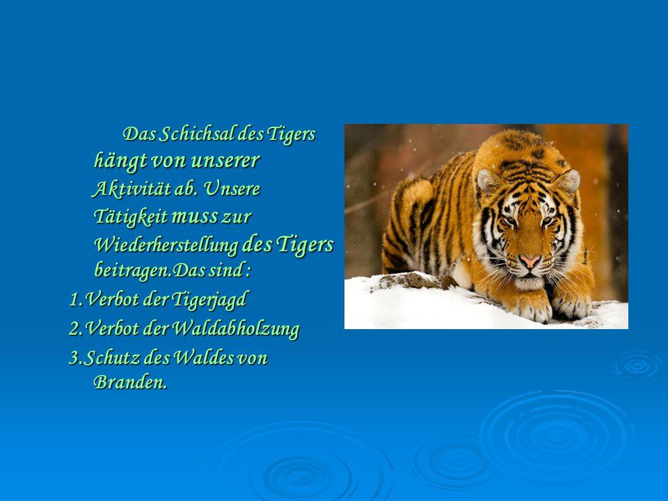 Das Schichsal des Tigers h ängt von unserer Aktivität ab.