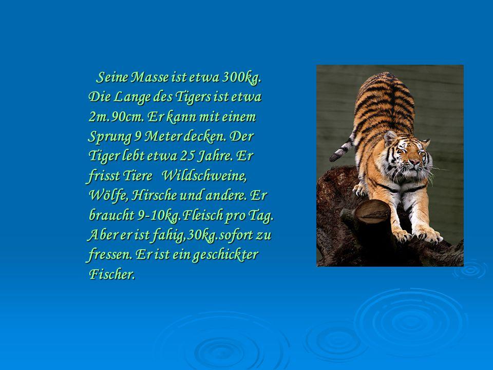 Seine Masse ist etwa 300kg.Die Lange des Tigers ist etwa 2m.90cm.