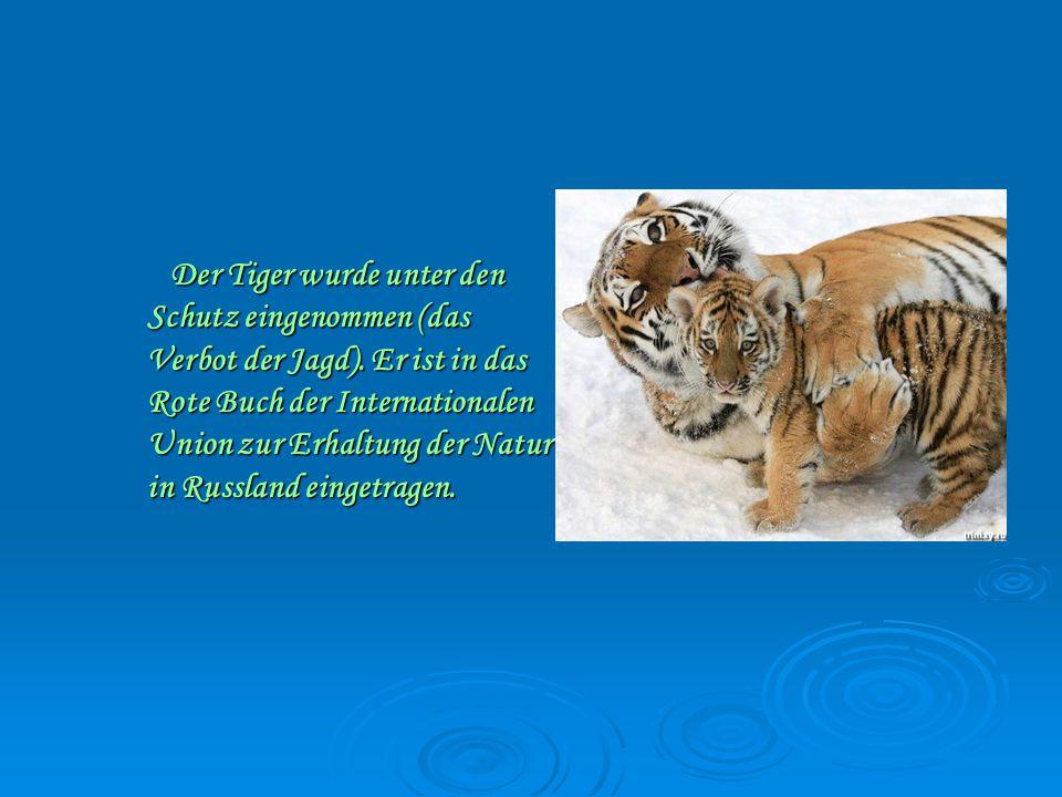 Der Tiger wurde unter den Schutz eingenommen (das Verbot der Jagd).
