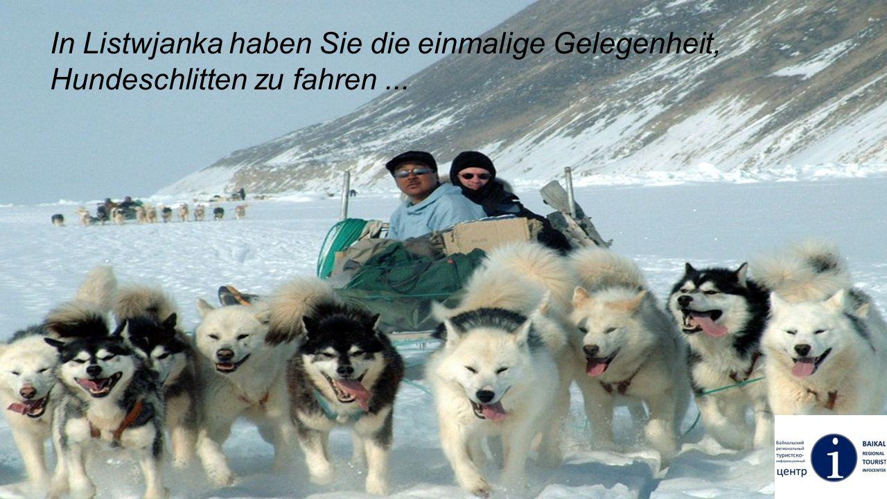 In Listwjanka haben Sie die einmalige Gelegenheit, Hundeschlitten zu fahren...