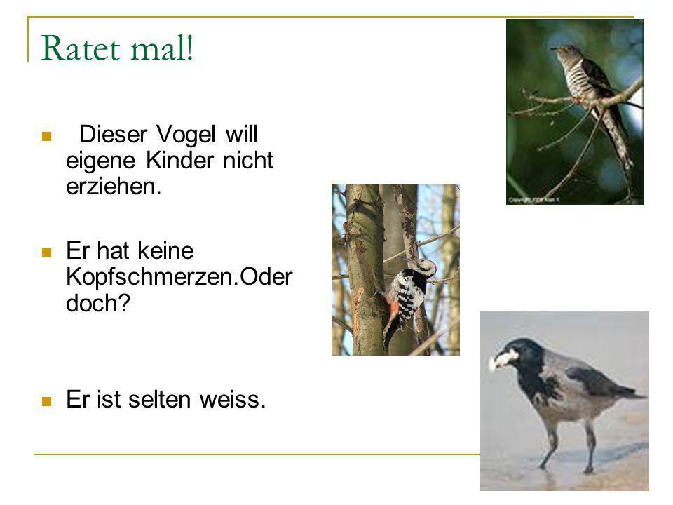 Ratet mal! Dieser Vogel will eigene Kinder nicht erziehen. Er hat keine Kopfschmerzen.Oder doch? Er ist selten weiss.