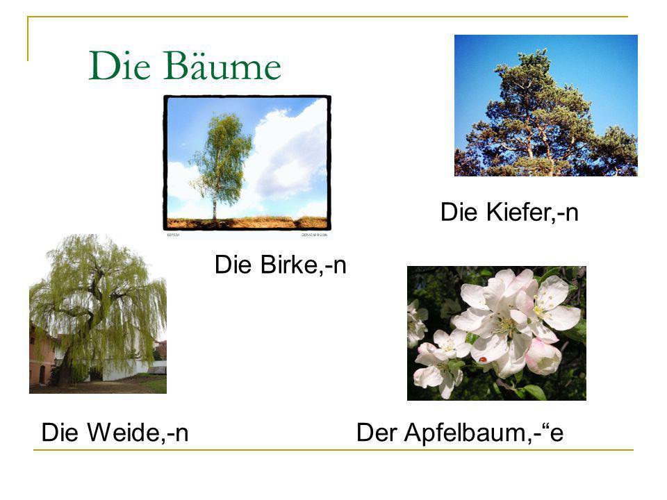 Die Bäume Die Birke,-n Die Kiefer,-n Die Weide,-nDer Apfelbaum,-e