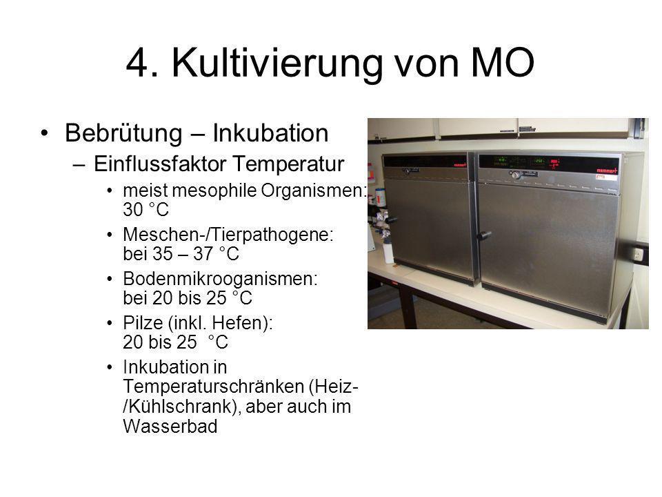 4. Kultivierung von MO Bebrütung – Inkubation –Einflussfaktor Temperatur meist mesophile Organismen: 30 °C Meschen-/Tierpathogene: bei 35 – 37 °C Bode