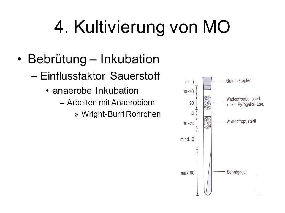 4. Kultivierung von MO Bebrütung – Inkubation –Einflussfaktor Sauerstoff anaerobe Inkubation –Arbeiten mit Anaerobiern: »Wright-Burri Röhrchen