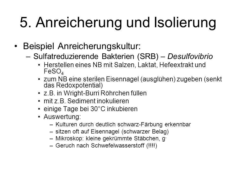 5. Anreicherung und Isolierung Beispiel Anreicherungskultur: –Sulfatreduzierende Bakterien (SRB) – Desulfovibrio Herstellen eines NB mit Salzen, Lakta