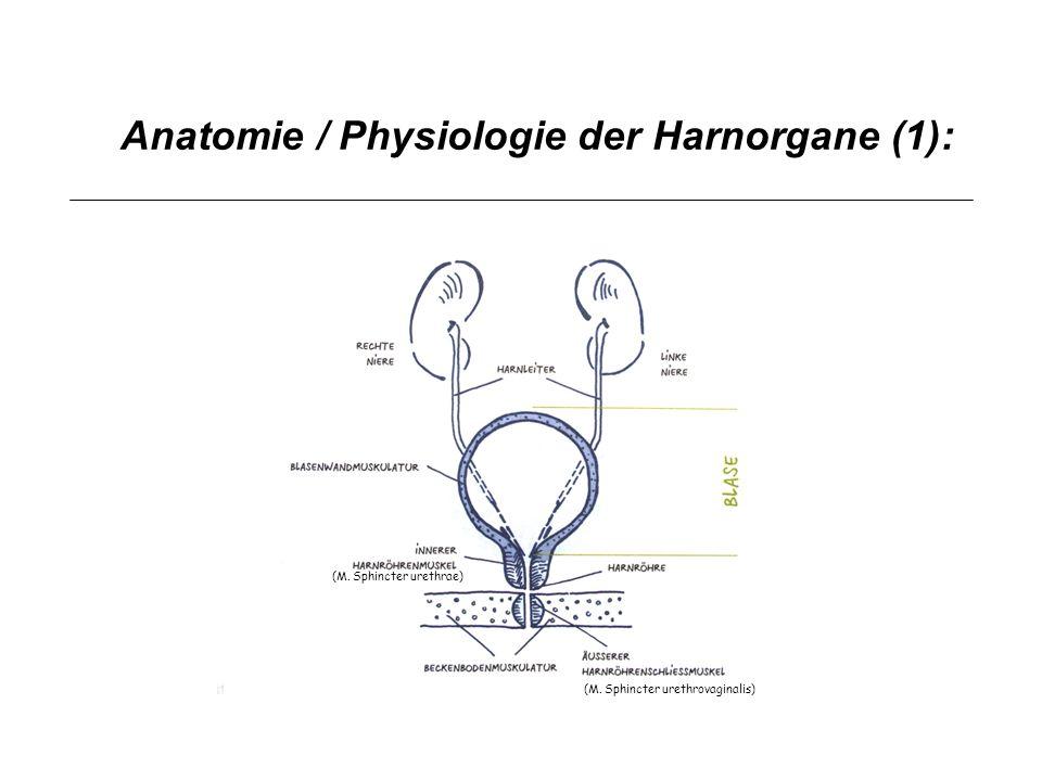 Medikamente und Harn- Inkontinenz: Sympathicus: Kontinenzzentrum Parasympathicus: Blasenentleerung Somatisches Nervensystem: Zusätzliche Kontinenzsicherung