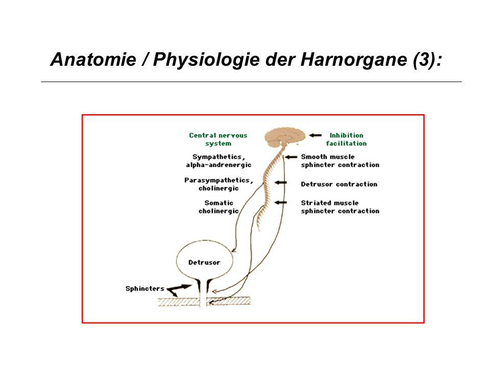 Anatomie / Physiologie der Harnorgane (4): Sympathicus: Kontinenzzentrum Parasympathicus: Blasenentleerung Somatisches Nervensystem: Zusätzliche Kontinenzsicherung