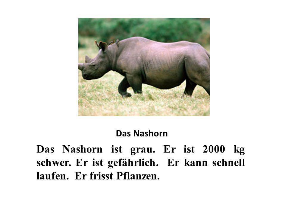 Das Nashorn Das Nashorn ist grau. Er ist 2000 kg schwer. Er ist gefährlich. Er kann schnell laufen. Er frisst Pflanzen.