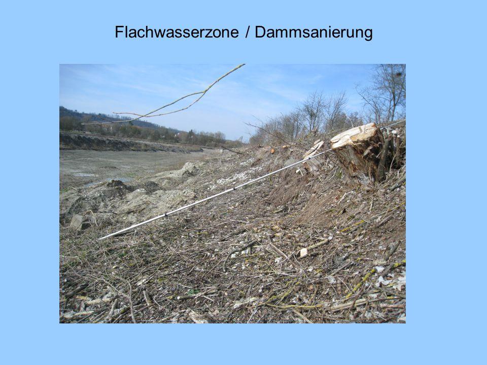 Flachwasserzone Maßnahmen: Anfüllen der Steilufer mit bindigem Bodenmaterial Einbringen einer Röhrichtwalze Einbringen einer Drahtschotterwalze / Steinschüttung zur Sicherung