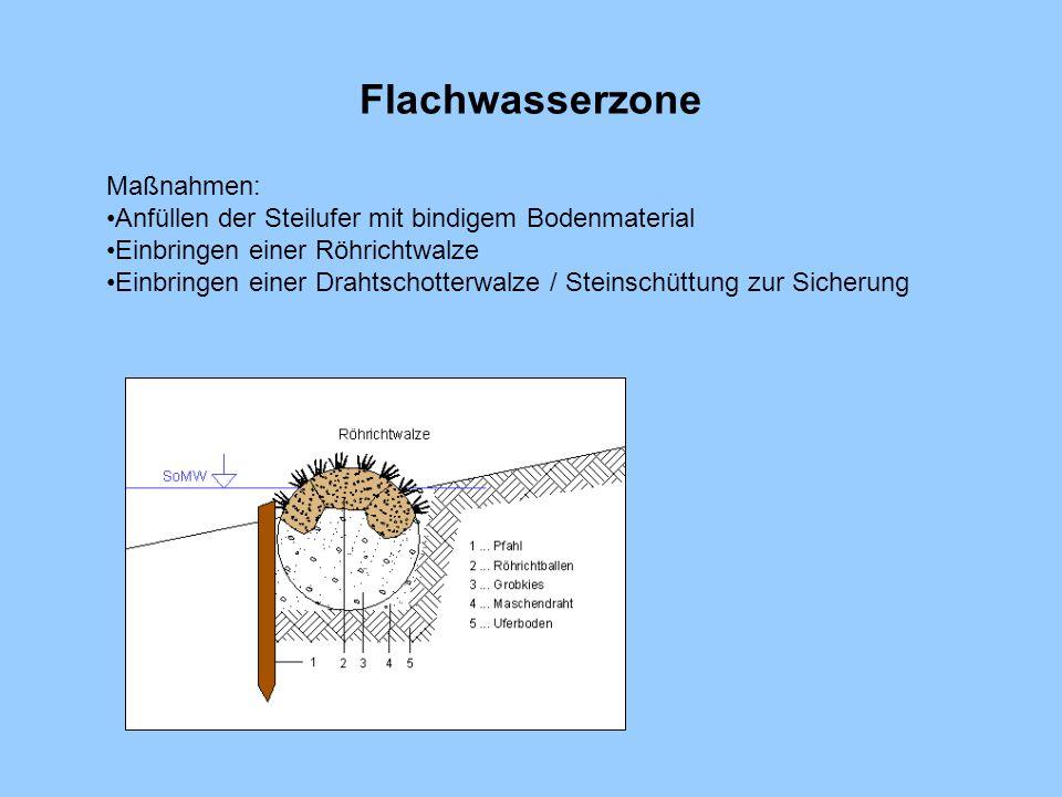 Flachwasserzone Maßnahmen: Anfüllen der Steilufer mit bindigem Bodenmaterial Einbringen einer Röhrichtwalze Einbringen einer Drahtschotterwalze / Stei