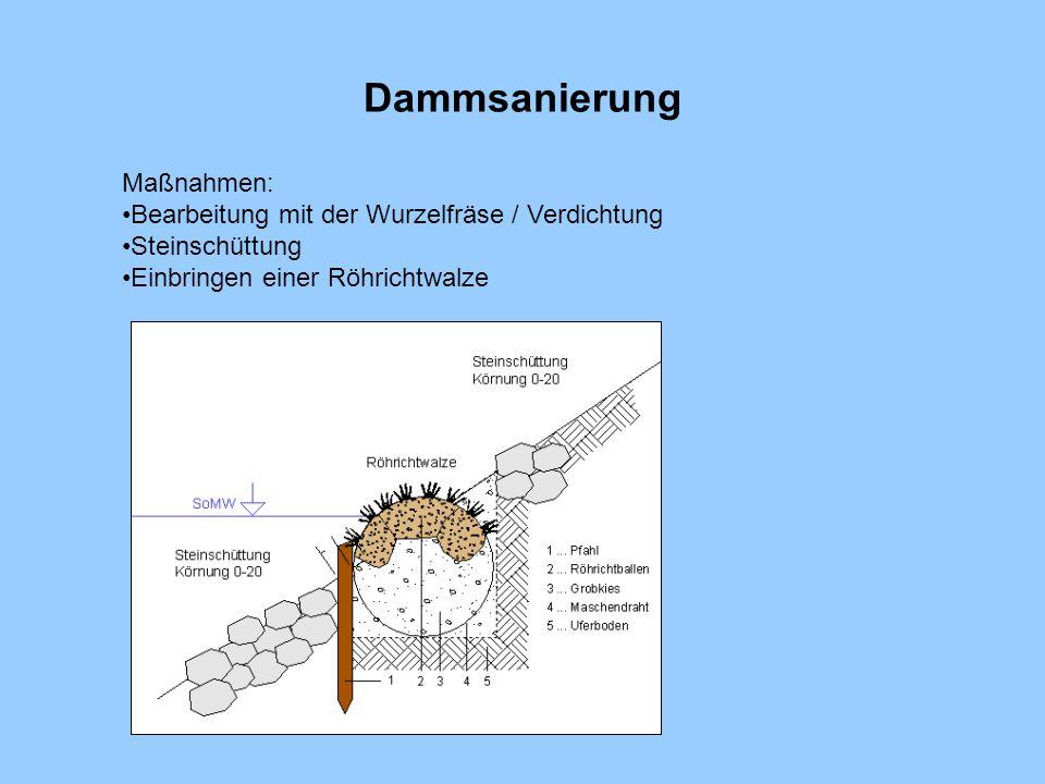 Dammsanierung Maßnahmen: Bearbeitung mit der Wurzelfräse / Verdichtung Steinschüttung Einbringen einer Röhrichtwalze