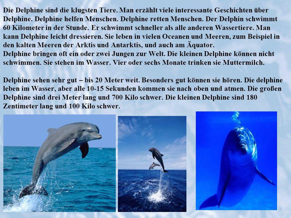 Die Delphine sind die klugsten Tiere. Man erzählt viele interessante Geschichten über Delphine. Delphine helfen Menschen. Delphine retten Menschen. De