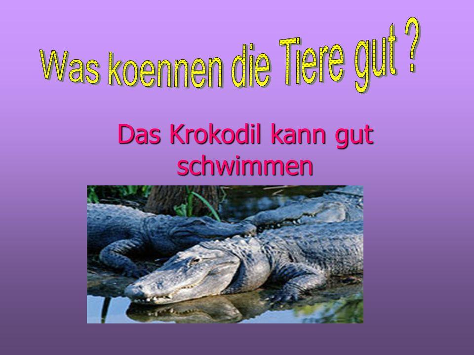 Das Krokodil kann gut schwimmen