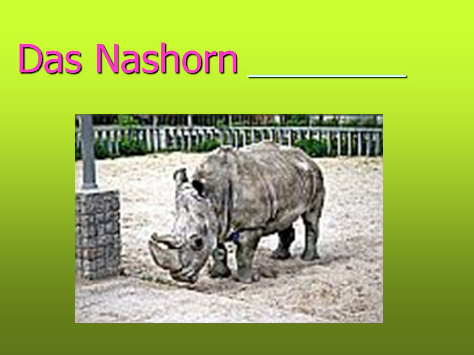 Das Nashorn __________