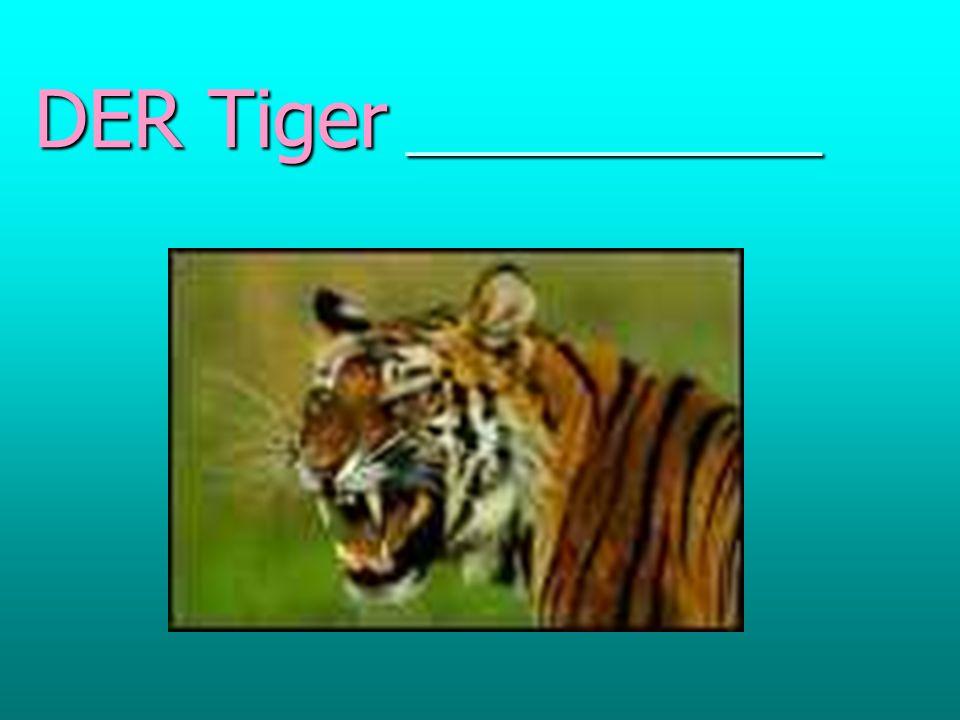 DER Tiger _____________