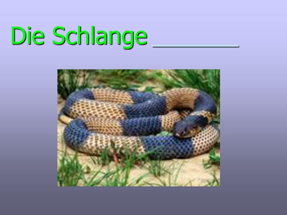 Die Schlange _________