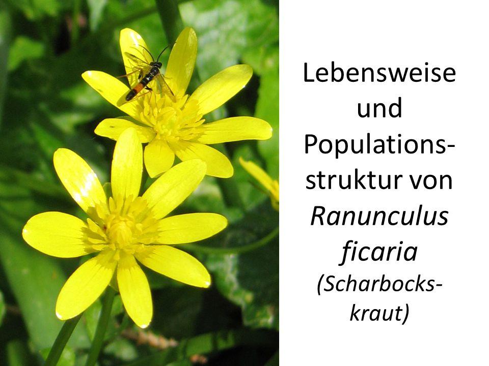 Lebensweise und Populations- struktur von Ranunculus ficaria (Scharbocks- kraut)