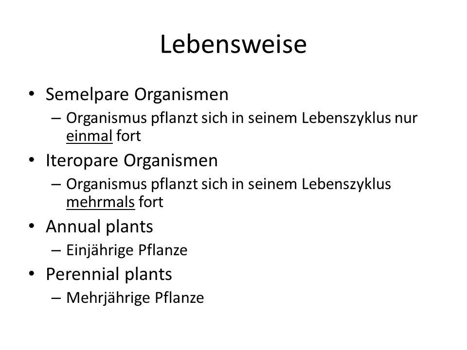 Lebensweise Semelpare Organismen – Organismus pflanzt sich in seinem Lebenszyklus nur einmal fort Iteropare Organismen – Organismus pflanzt sich in seinem Lebenszyklus mehrmals fort Annual plants – Einjährige Pflanze Perennial plants – Mehrjährige Pflanze