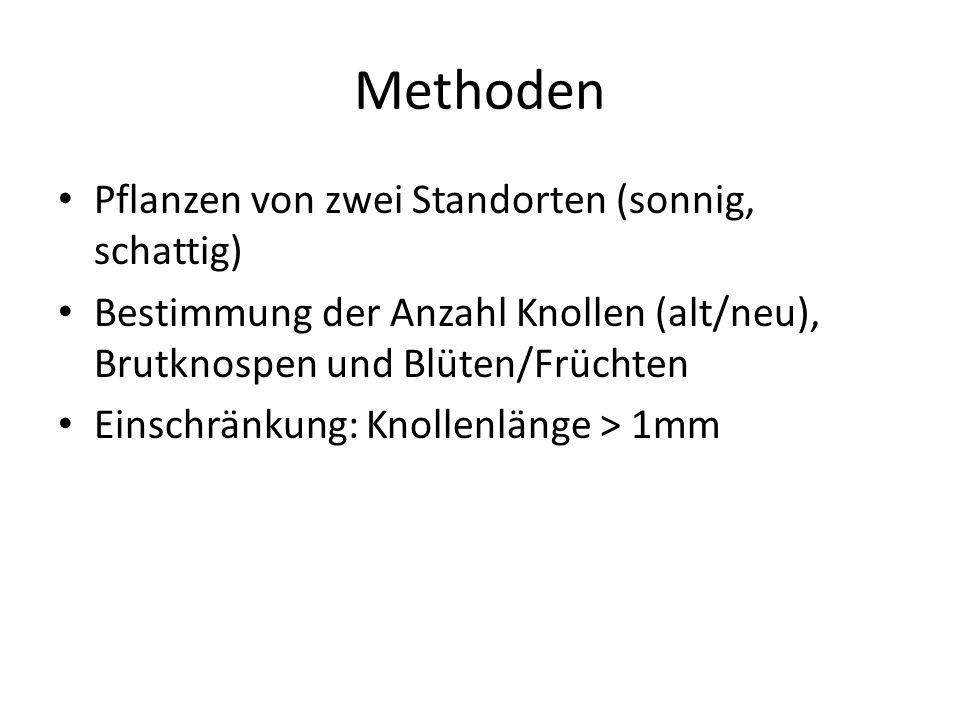 Methoden Pflanzen von zwei Standorten (sonnig, schattig) Bestimmung der Anzahl Knollen (alt/neu), Brutknospen und Blüten/Früchten Einschränkung: Knollenlänge > 1mm