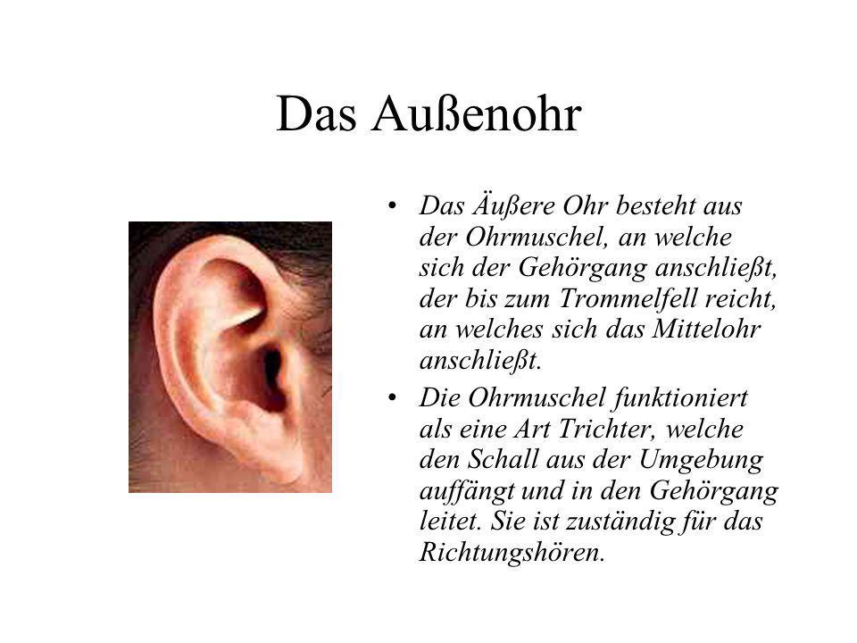 Das Außenohr Das Äußere Ohr besteht aus der Ohrmuschel, an welche sich der Gehörgang anschließt, der bis zum Trommelfell reicht, an welches sich das M