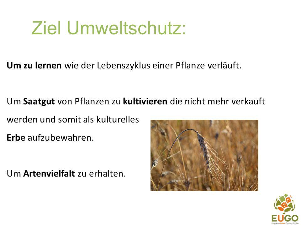 Ziel Umweltschutz: Um zu lernen wie der Lebenszyklus einer Pflanze verläuft.