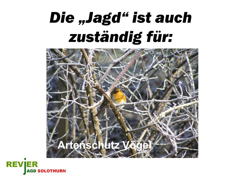 Die Jagd ist auch zuständig für: Artenschutz Vögel