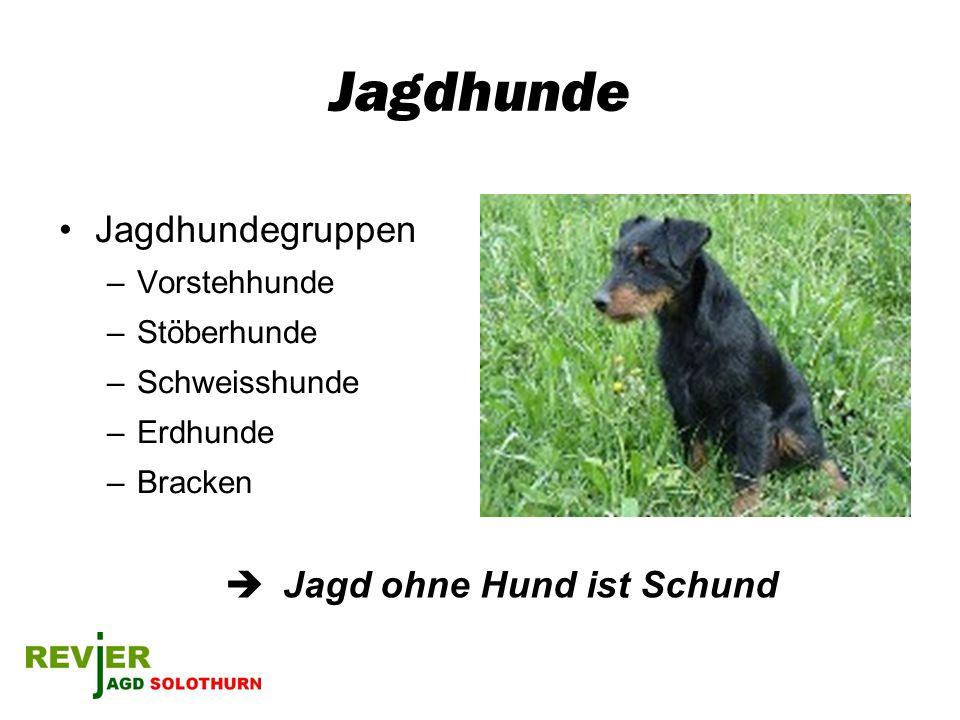 Jagdhunde Jagdhundegruppen –Vorstehhunde –Stöberhunde –Schweisshunde –Erdhunde –Bracken Jagd ohne Hund ist Schund