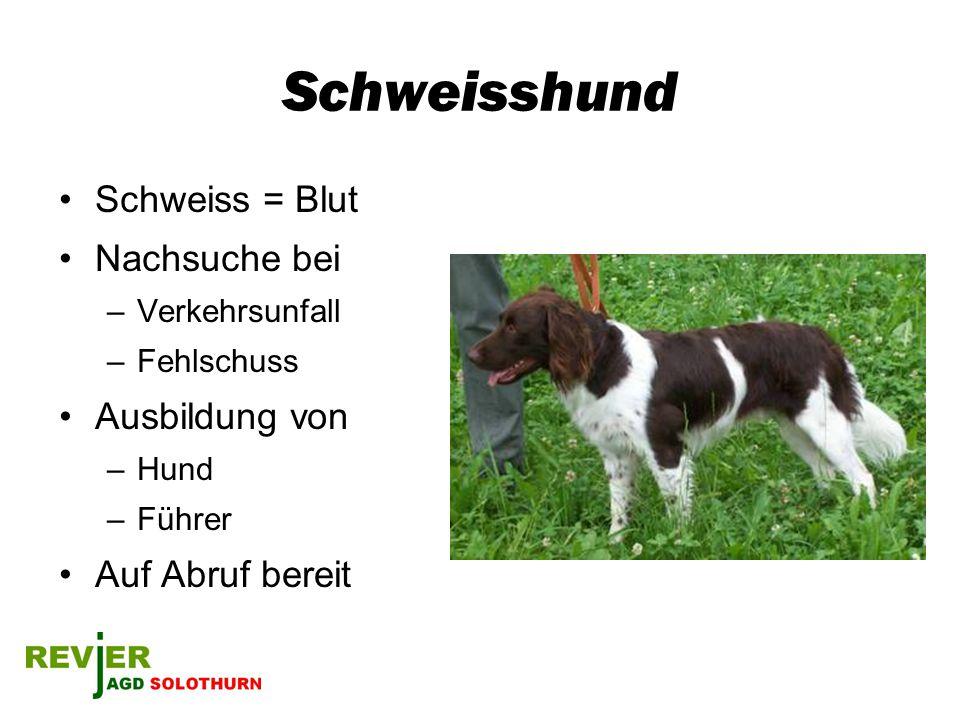 Schweisshund Schweiss = Blut Nachsuche bei –Verkehrsunfall –Fehlschuss Ausbildung von –Hund –Führer Auf Abruf bereit