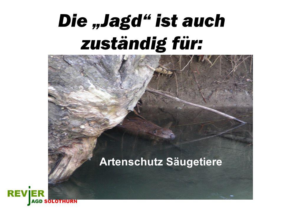 Die Jagd ist auch zuständig für: Artenschutz Säugetiere