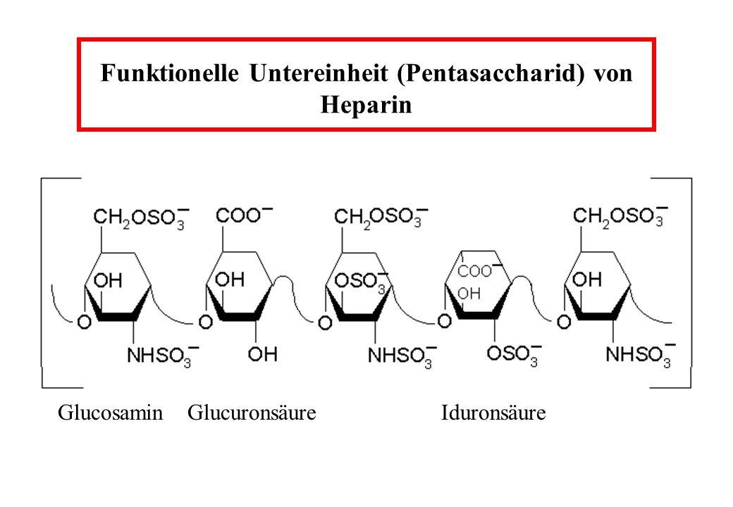 Wirkung von Heparin auf Thrombin und Faktor Xa Inaktivierung