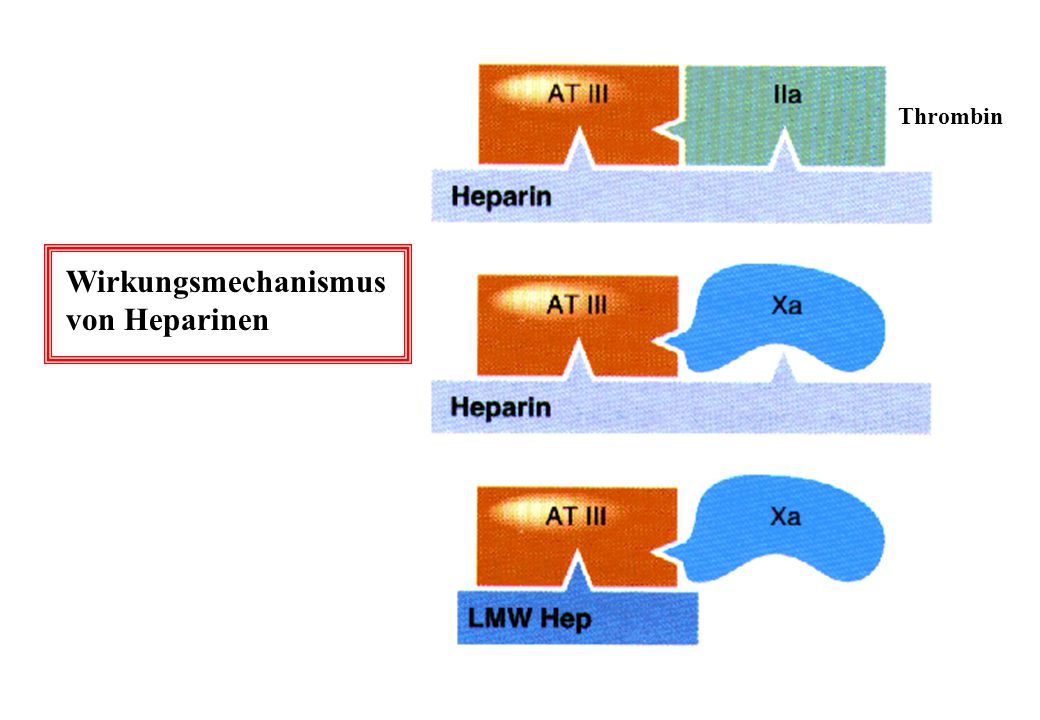 Thrombin Wirkungsmechanismus von Heparinen