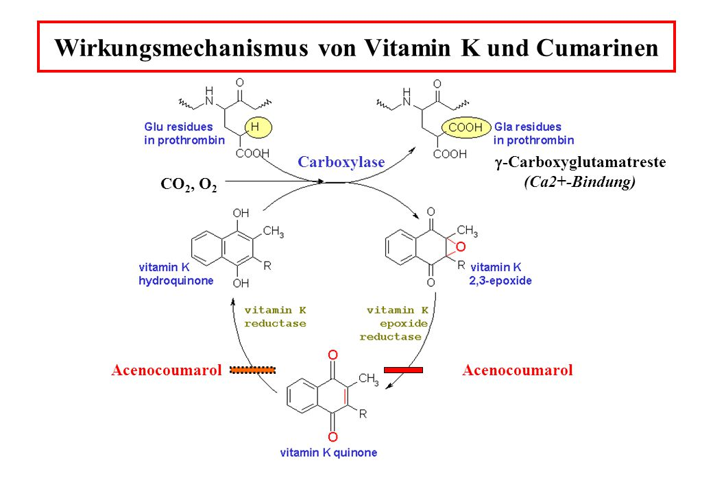 Aktivität der vier Vitamin K-abhängigen Gerinnungsfaktoren als Funktion der Zeit nach Zugabe von Warfarin