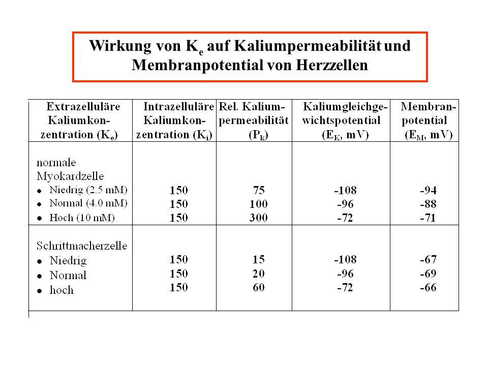 Wirkung von K e auf Kaliumpermeabilität und Membranpotential von Herzzellen