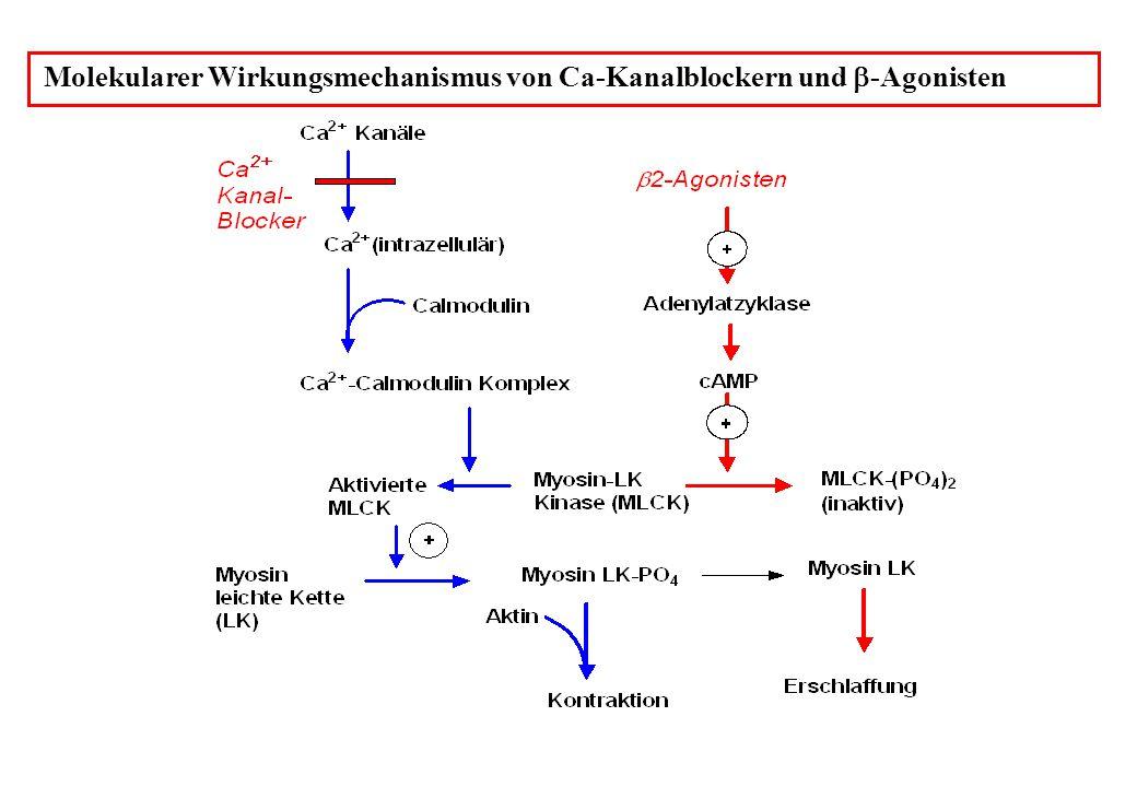 Molekularer Wirkungsmechanismus von Ca-Kanalblockern und -Agonisten
