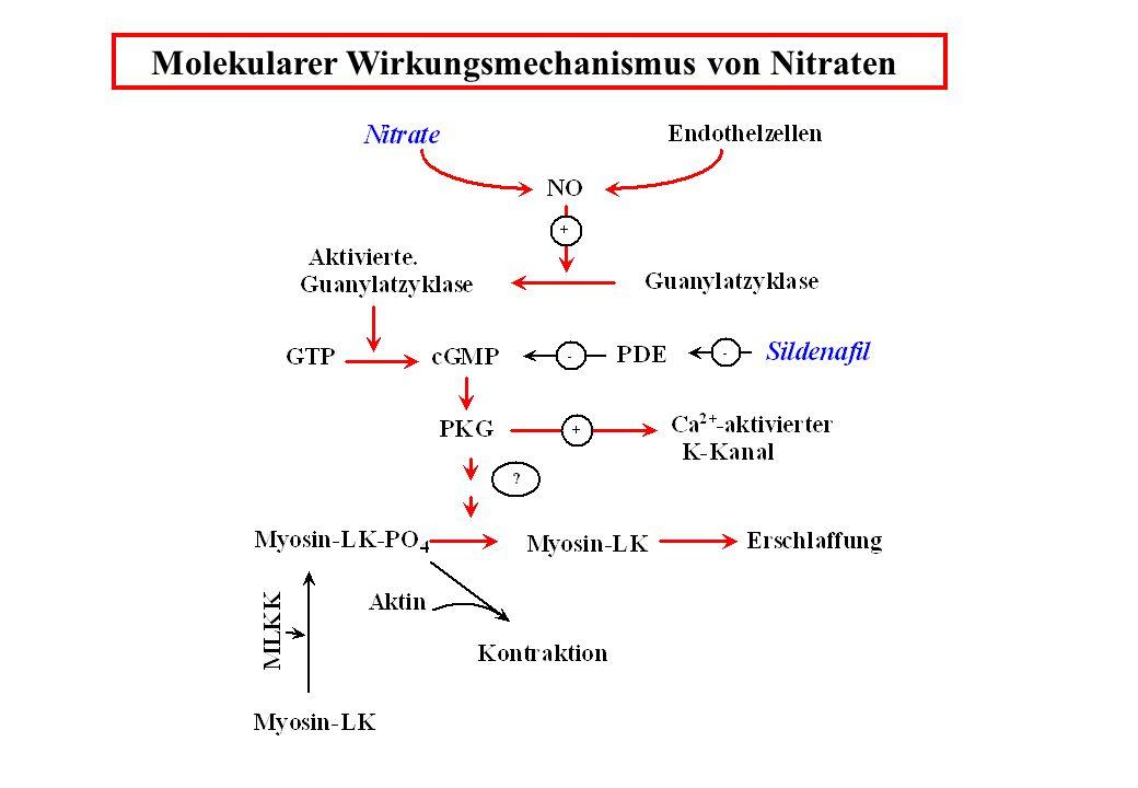Molekularer Wirkungsmechanismus von Nitraten