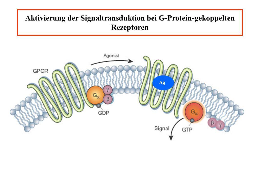 Aktivierung der Signaltransduktion bei G-Protein-gekoppelten Rezeptoren Ag